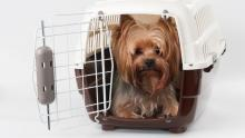 Travelling with pets from Canada to the U.S.